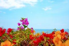 在五颜六色的花之间的九重葛花前个身分 免版税图库摄影