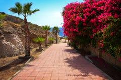 在五颜六色的花和棕榈树中的花卉车道 免版税库存图片