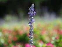 在五颜六色的花园背景的唯一花开花 免版税库存照片