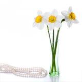 在五颜六色的花瓶的三棵水仙在白色背景 库存图片
