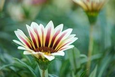 在五颜六色的花田内的花 免版税库存图片