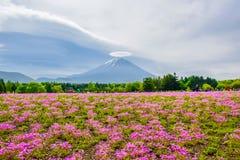 在五颜六色的花田后的富士山视图在富士Shibazakura Fastival,日本 免版税库存图片