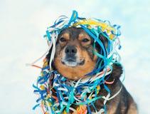在五颜六色的蛇纹石卷入的狗 免版税库存照片