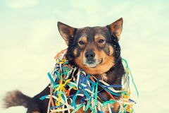 在五颜六色的蛇纹石卷入的狗 库存图片