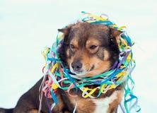 在五颜六色的蛇纹石卷入的狗 免版税图库摄影
