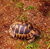 在五颜六色的装甲的乌龟 库存图片