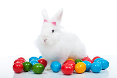 在五颜六色的鸡蛋中的逗人喜爱的白色复活节bunnz 库存照片
