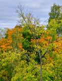 在五颜六色的sibilings之间的一棵赤裸树 图库摄影