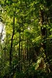 在亚马逊雨林的美好的绿色风景 免版税库存图片
