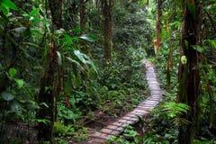 在亚马逊雨林的雨林足迹 免版税库存照片