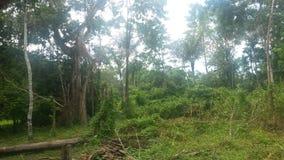 在亚马逊-自然奇迹旅行 免版税图库摄影