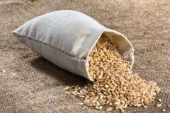在亚麻制大袋的糙米 图库摄影