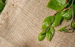 在亚麻帆布的绿色叶子 免版税图库摄影