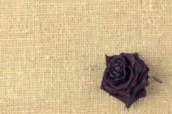 在亚麻帆布背景的一朵干燥红色玫瑰 库存照片