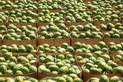 在交付的纸板箱包装的成熟西瓜对商店 ?? 库存图片
