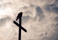 在交叉的乌鸦 库存图片