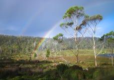 在产树胶之树后的彩虹 库存照片