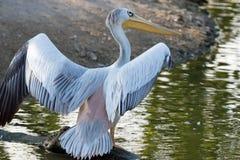 在亨利杜尔利动物园的野生生物 图库摄影