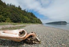 在亮光Tidelands Bywater海湾的国家公园岸的漂流木头在口岸Ludlow附近在皮吉特湾在华盛顿州 免版税库存照片