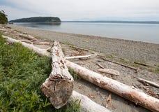 在亮光Tidelands Bywater海湾的国家公园岸的漂流木头在口岸Ludlow附近在皮吉特湾在华盛顿州 图库摄影