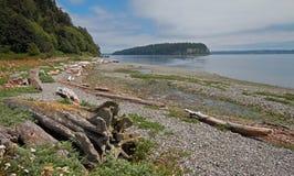在亮光Tidelands Bywater海湾的国家公园岸的漂流木头在口岸Ludlow附近在皮吉特湾在华盛顿州 免版税库存图片