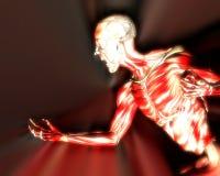 在人体10的肌肉 免版税库存图片