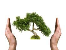 在人力现有量的结构树 免版税图库摄影