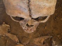 在人力被看见的头骨之上 免版税库存图片