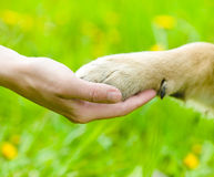 在人和狗-震动之间的友谊手和爪子 免版税图库摄影