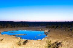 黑在人工被点燃的waterhole蓝色h的犀牛饮用水 免版税库存图片