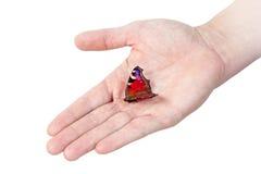 在人的手上的孔雀铗蝶 免版税库存照片