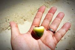 在人的手上的椰子 免版税库存图片
