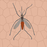 在人的皮肤的一只蚊子 免版税库存图片