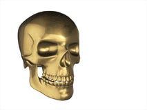 在人的透视的金黄头骨,隔绝在白色背景 库存照片