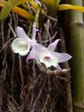 在人行道的紫色野生兰花 库存照片