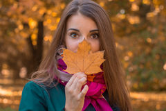在人附近保留干燥叶子在公园一个美丽的女孩的画象 库存照片