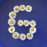 在从白花,雏菊,艾里斯perennis,特写镜头的G上写字,在蓝色背景 免版税图库摄影