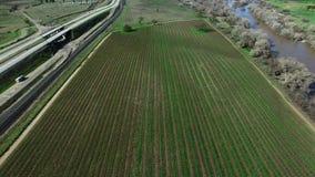 在从直升机射击的高速公路附近的种植园领域 股票视频