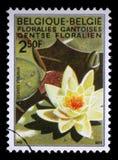 在从跟特花展问题的比利时打印的邮票显示荷花 免版税库存图片