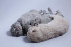 在他们的后面的新出生的小猫有爪子的,逗人喜爱的面孔 库存照片