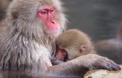在他的母亲胸口的一只小日本猴子在采取一泰铢期间 免版税图库摄影