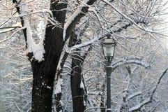 在以后的佛罗伦萨降雪在12月 在piazzale米开朗基罗的多雪的树 图库摄影