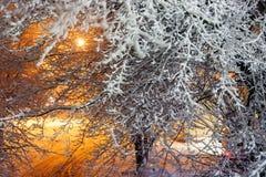 在以后的积雪的树在街灯的降雪 33c 1月横向俄国温度ural冬天 库存照片
