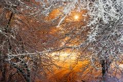 在以后的积雪的树在街灯的降雪 33c 1月横向俄国温度ural冬天 库存图片