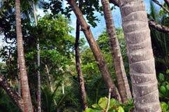 在以天空为目的一个热带森林里面 库存照片