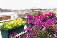 在伊斯坦布尔和云彩风景背景中装饰阳台的花 库存图片