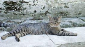 在伊斯坦布尔街的离群猫 股票视频