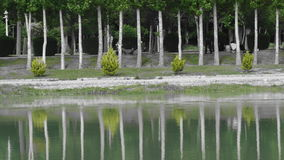在伊朗,在水反映的树过周末假日 库存图片
