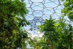 在伊甸园项目生物圆顶里面的热带雨林植被 库存图片