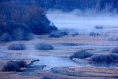 在伏尔塔瓦河河附近的典型的冬天风景在Lipno水库, Sumava国家公园附近在捷克 有meand的绿色森林 免版税库存照片